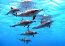 Tropical feeling von Gesellschaft zur Rettung der Delphine e.V.